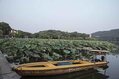 dsc_1247 (gaojie'sPhoto) Tags: hang zhou hangzhou westlake west lake