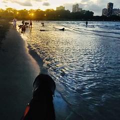 Sunset on the Dog Beach #lakemichigan #montrosedogbeach #sunset (ma4werner) Tags: lakemichigan montrosedogbeach sunset