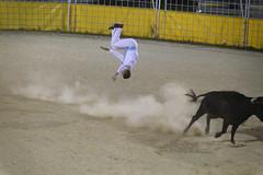 Course landaise (Alexandre Dolique) Tags: d850 nikon landes hossegor capbreton course de vaches landaises landaise