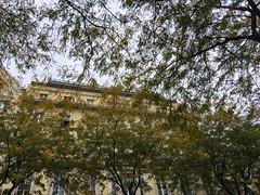 Mitte (brimidooley) Tags: mitte trees vienna wien austria österreich oostenrijk autriche eu europe travel viedeň city citybreak tourism viena vienne