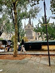 Sur les quais  Driving by Notre-Dame. #Paris #notredamedeparis #notredame #cathedral #rosace #rosacea #tree #church #architecture #Seine #riverSeine #riverbanks #city #travel #trip #Parisianlife #hope #photography #samsungphoto #SamsungGalaxyNote8 #Samsun (isabella.cabre) Tags: city rosacea church tree riverbanks parisianlife notredamedeparis hope samsunggalaxynote8 riverseine seine trip pluspretdetoimondieu samsungphoto rosace notredame travel paris cathedral photography architecture samsungphotography