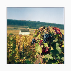 vineyards 5 • burgundy, france • 2017 (lem's) Tags: vineyards vignes vignobles wine vin raisins grapes gevrey chambertin maison house burgundy bourgogne zenza bronica
