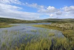ved Litje Svergjesjøen (KvikneFoto) Tags: nikon1j2 natur norge hedmark kvikne landskap