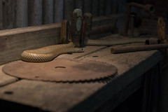 """Hand me that screwdriver son"" (SteveKPhotography) Tags: sony stevekphotography alpha a99ii ilca99m2 sal50f14 50mm niftyfifty animal wildlife nature easternbrownsnake cavershamwildlifepark reptile snake"