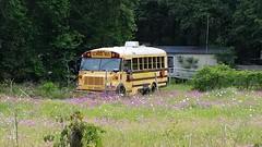 Ex-Alachua District School Bus (abear320) Tags: school bus alachua district schools gainesville florida carpenter thomas international vista archer