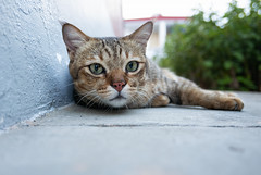 180820 - Meow (y_leong23) Tags: dlux leica cat singapore