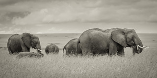 The wonderful Masai Mara, with this amazing Elefants!