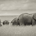 The wonderful Masai Mara, with this amazing Elefants!