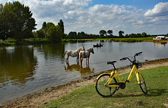 Messing About On The River (Free.heel) Tags: ofobike ofo riverthames thames wildponies portmeadow nikkor2485mmf3545gedvrlens nikond810 oxford