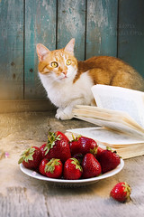 cat and strawberry (lera_abrakadabra) Tags: cat catslovers cutecat animalphotography summertime relaxation catface gingerwhitecat strawberry stilllife lovely rustic book villagelife simplelife redberries everydaylife casual meow kitty mimimi