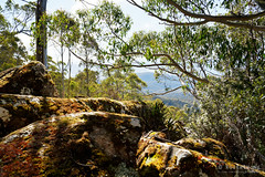 20180908-13-Radford and Zig Zag tracks on Mt Wellington (Roger T Wong) Tags: 2018 australia hobart mtwellington rogertwong sel24105g sony24105 sonya7iii sonyalpha7iii sonyfe24105mmf4goss sonyilce7m3 tasmania bushwalk