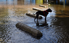 Hurricane Florence Monday (Virginia Sea Grant) Tags: aileendevlin hamptonroads noaa seagrant virginia virginiaseagrant williammary hurricaneflorence hurricane hurricanseason flooding flood floods floodresilience storm stormwater weather climate gloucesterpoint usa