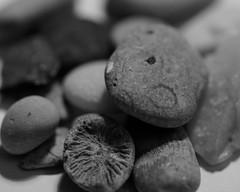 Collection for Macro Mondays (annesjoberg) Tags: macromondays rock rocks sten stenar macro macrophoto monochrome hmm happymacromondays