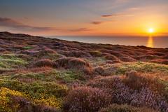 Dunwich Heath (Albert's Photo's) Tags: dunwich minsmere heath sunrise suffolk uk coast canon 5d mkii north sea east anglia