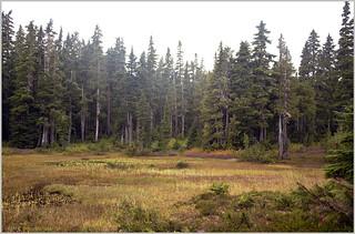 strathcona meadow