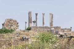 2018/07/09 12h26 ruines de Volubilis (Valéry Hugotte) Tags: 24105 antiquité maroc volubilis canon canon5d canon5dmarkiv romain ruines