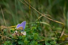 _DSC0132 (auverdose60) Tags: papillon butterfly nikon d3400 proxi macro