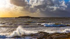 _61A7080.jpg (fotolasse) Tags: sonyhalmstadstorm surfing halmstad storm knud havet sea vågor vatten hav natur klippor solnedgång