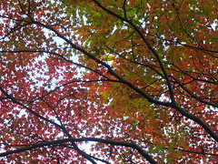 a (37) (hiromi89) Tags: japan beauty beautiful scenery flower wood pond