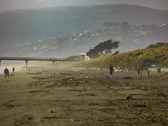 After the Storm (Steve Taylor (Photography)) Tags: sticks flotsam fence timber wood people dog sand newzealand nz southisland canterbury christchurch newbrighton beach dunes summer mist pier porthills