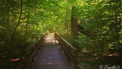 Your path awaits! (Edale614) Tags: path trail naturephotography naturelovers nature photography photo photooftheday pic picoftheday columbus ohio inniswoodmetrogardens cbusmetroparks cbus earl614 woods wanderlust aroundtheworld exploreohio
