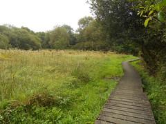DSCN5687 (norwin_galdiar) Tags: bretagne brittany breizh finistere monts darrée nature landscape paysage