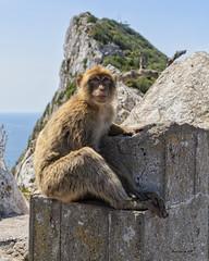 Macaque (brentus69) Tags: europe england gibraltar rock macaque primate monkey sonya6500