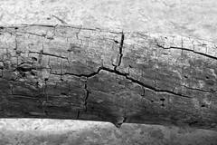 Patterns of the Ancients (lensofjon) Tags: wood texture log nature tree austintx atx austintexas monochrome monochromatic blackandwhite bnw canonrebel