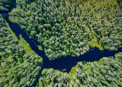 Backwood river (miemo) Tags: dji europe finland juuka kytöjoki mavic mavicpro northkarelia aerial creek drone forest landscape marsh nature river riverbend summer swamp topdown trees water fi