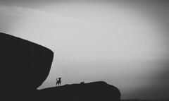 Lonely (mripp) Tags: art vintage retro black white dog animal silhouette sony alpha 7rii voigtländer nokton 40mm