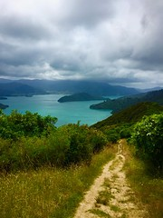 Queen Charlotte Trail, New Zealand (Seymour Lu) Tags: