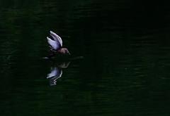 Keep looking (Debmalya Mukherjee) Tags: egret anushaktinagar bird lowkey debmalyamukherjee canon550d 18135