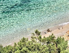 The last trip outside of the beloved waters. (AchillWandering) Tags: tree sand water environment environmental sandy beach remote attica megaris greece turtle sea bay ancient aigosthena