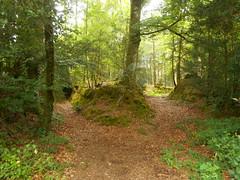 DSCN5650 (norwin_galdiar) Tags: bretagne brittany breizh finistere monts darrée nature landscape paysage