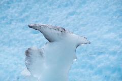 Nygardsbreen-06094.jpg (Jostiwerken) Tags: norway noorwegen danger gevaar gletsjer calvingglacier bird blauw meltingice smeltendijs glacier nygardsbreen ijs norge