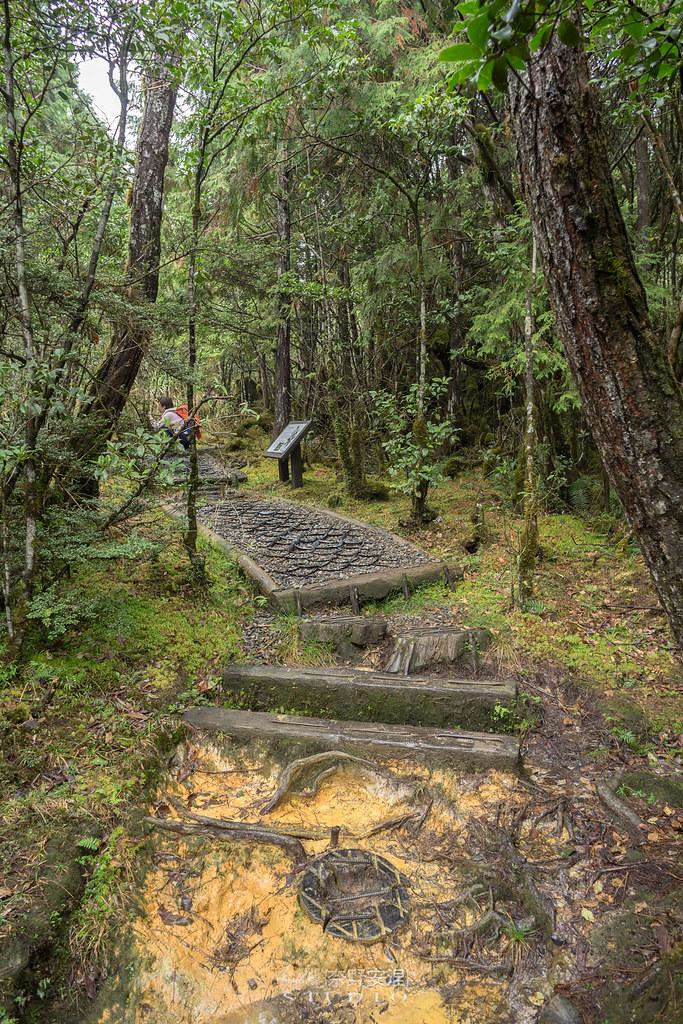 太平山翠峰湖環山步道 |走在泥濘的道路上,只為途中美景 | 宜蘭大同鄉49