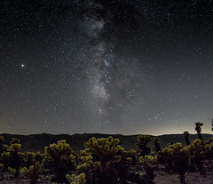 Cholla Cactus Garden (rob_luna) Tags: milky way photography astrophotography astro sony a7r3 a7riii 16mm sigma starry stars joshua tree national park galactic center nights night sky cholla cactus mars california desert astroscape