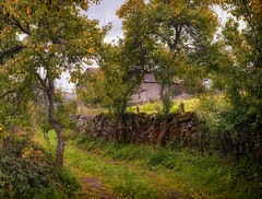 13th September 2018 (Rob Sutherland) Tags: lyth valley whitebeck lane track barn tree damson autumn colour color fall cumbria cumbrian lakes lakeland lakedistrict england english uk wall drystone old past ancient traditional rural farm farming