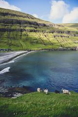 Sheep in Tjørnuvík (photographybyjoss ↟↟) Tags: faroeislands färöarna islandlife ocean europe nature nordic remote remoteplaces landscape landschaft dreamscapes canon canoneos5dmarkiii green lush tjørnuvík sheep