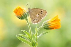 5. The Sun Won't Shine Forever... (Zbyszek Walkiewicz) Tags: sony butterflies butterfly closeup coth coth5