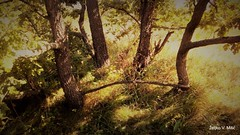 IMG_20180916_103007 (Željko V. Mitić) Tags: september outdoors nature naturephotography village countryside sunny sunnyday morning tree trees