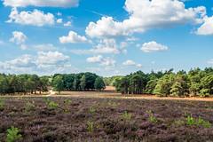 Wezepsche Heide (Gerrit Veldman) Tags: dutch gelderland holland nederland netherlands wezep wezepscheheide heath heide landschap landscape olympus epl7 lucht sky wolken clouds natuur nature trees bomen bos forest