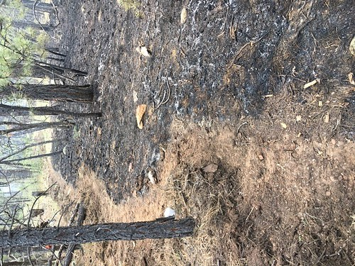 Mariposa Fire 2018