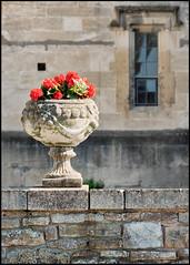 Thornbury Castle (Mark Greening) Tags: thornbury thornburycastle wall plantpot window plant red