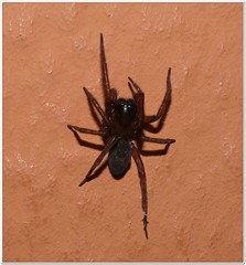 Uninvited Guest (MaxUndFriedel) Tags: nature indoors spider autumn september