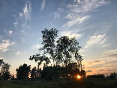 Trees Clouds And Sunset (Marc Sayce) Tags: trees sunset sundown woolmer ranges forest conford longmoor south downs national park hampshire summer autumn september 2018