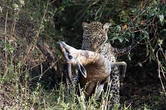 LD9A4733_DxO (Emmanuel Bonnetot) Tags: kenya 2018 masai mara