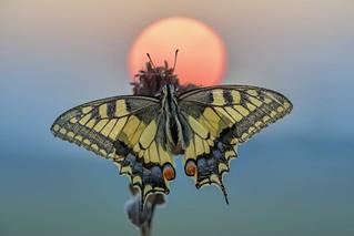 *sunrise dancer*