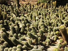 Cactus Country, Strathmerton 1420 (Lesley A Butler) Tags: victoria strathmerton cactuscountry cacti australia