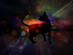 On A Quest (soniaadammurray - On & Off) Tags: digitalphotography manipulated experimental collage abstract picmonkey bokeh bokehwednesdays artchallenge cats quest search learn light colours nighttime reflections shadows